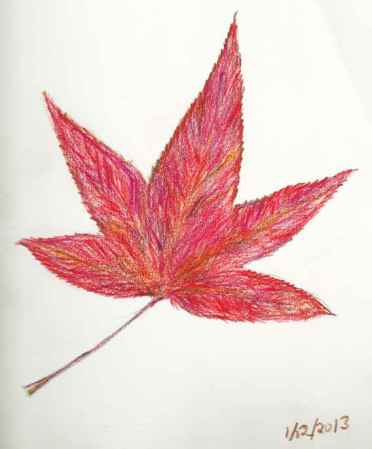 Winter Leaf - colored pencil