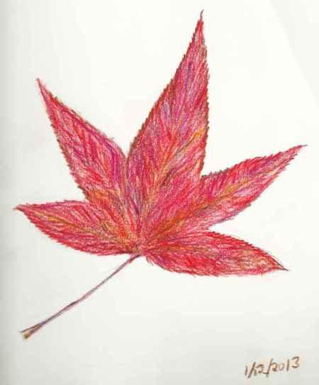 Winter Leaf - colored pencil