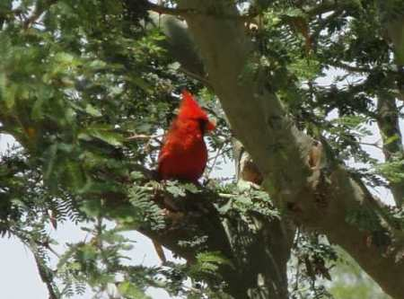 wpid-cardinal