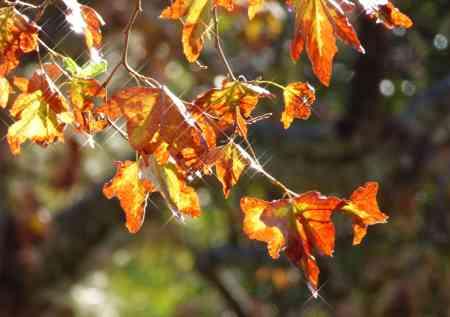 Ca Autumn